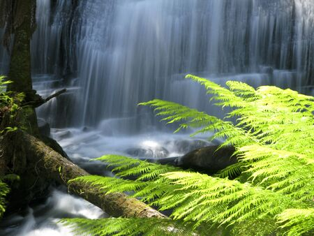 water fall in rain forest in australia with fern leaves in foreground