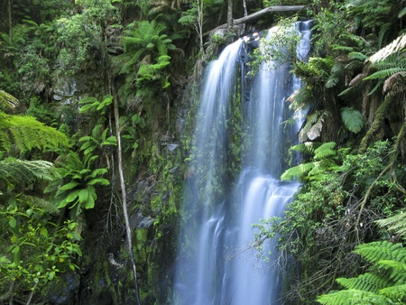 medium sized water fall in a rain forest in australia