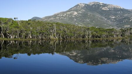 lake and eucalyptus forest in wilsons promotory national park, australia Stock Photo
