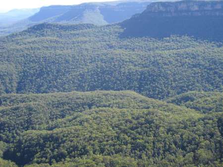 forest in the blue mountains national park in new south wales, australia Stock Photo - 9763902