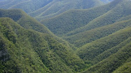 forest on mountains in new south wales, australia Stock Photo