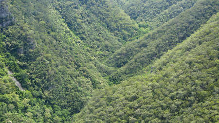 forest on mountains in new south wales, australia Stock Photo - 9763944