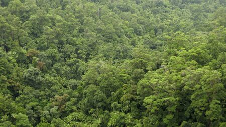 australian rain forest canopy seen from above