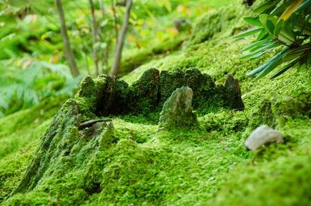 Forest floor covered with moss, natural green background
