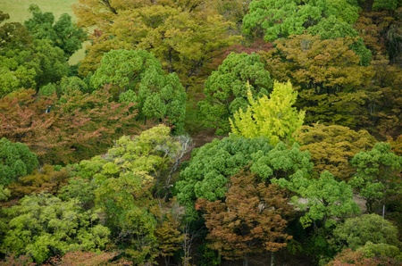 Colorful japanese deciduous forest canopy as seen from above in autumn in Osaka, Japan