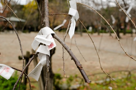 Omikuji are random fortunes written on strips of paper at Shinto shrines and Buddhist temples in Japan Stock Photo - 13580925