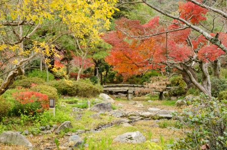 Japanese park in Kyoto in autumn with red and yellow leaves Standard-Bild