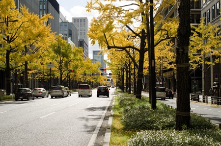 Midosuji Avenue in Osaka in autumn with cars and yellow ginkgo trees
