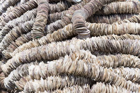 settling: Background of scallop shells arranged on ropes to be used in oyster farming as settling substrate for the oyster larvae