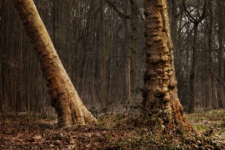 utopian: Dreamy forest landscape suggesting the beginning of spring, longer days with more light Stock Photo