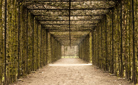 known: A natural tunnel in the park of Hingene  Belgium , suggestion hope at the end of a tunnel