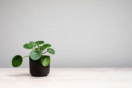 Small  green plant in a black pot on light wooden surface Banco de Imagens