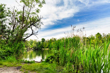 Walenhoek, Niel, Belgium: Log in front of a beautiful natural pond.