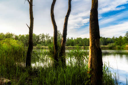 walenhoek, Niel, Belgium:  Dead trees in front of a beautiful small lake at golden hour