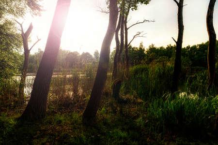 Sun shining through the trees near  small lake at sunset