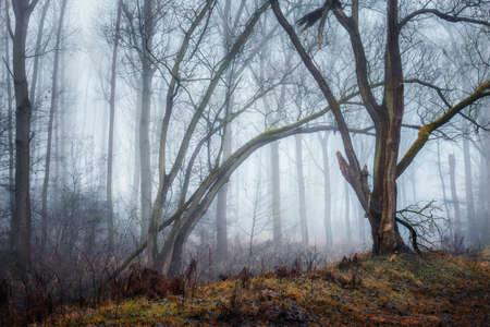 Hoboken, Belgium - A forest in the mist