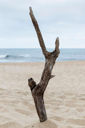 Nazare, Portugal - A piece of drifwood plade upright on the beach Stock Photo