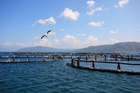 Aquaculture coast photo