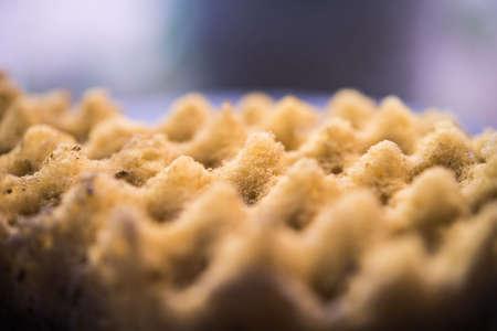 dirty: Dirty Sponge
