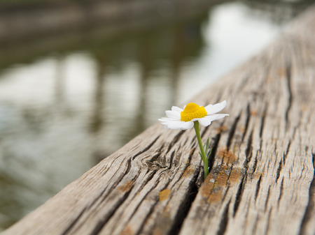 Young flower grows on a wooden surface. Shallow dof