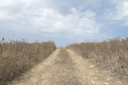 Rural dirt road leads through dry grassland against blue sky with clouds Standard-Bild