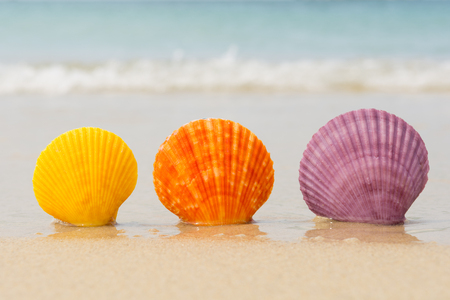Sea shells in natural vibrant colors on the beach Stock Photo
