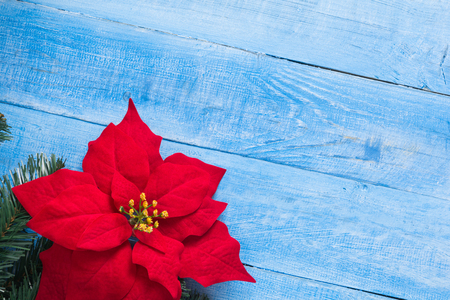 Red christmas flower poinsettia, on a wooden background