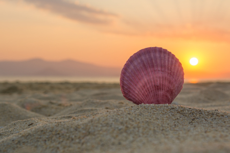 Sea shell on the beach at sunset 写真素材
