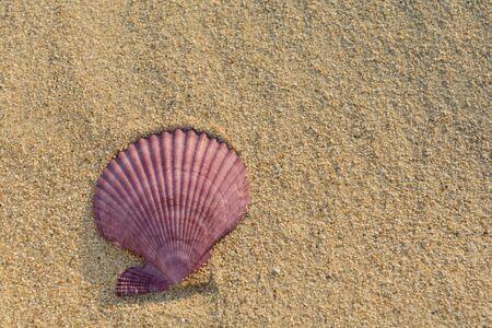Sea shell on a sandy beach Stok Fotoğraf