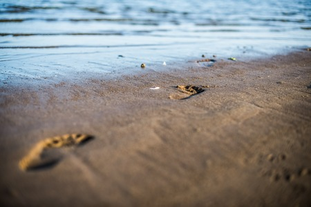 impermanent: morning footprints on wet sand at the beach line