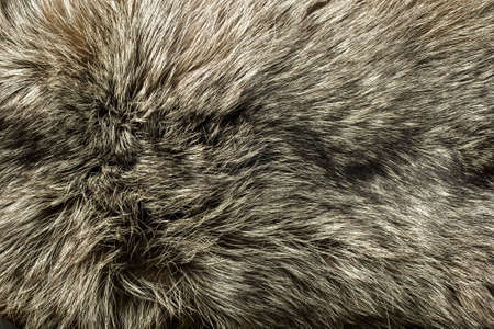 fox fur: Closeup of beautiful polar Fox fur. Useful as background Stock Photo