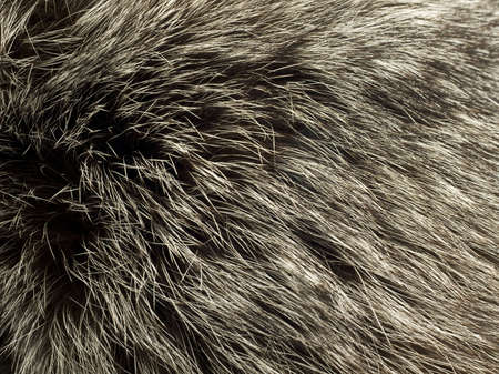 peltry: Beautiful fur of polar Fox. Useful as background