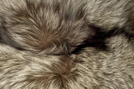 peltry: Closeup of beautiful polar Fox fur. Useful as background Stock Photo