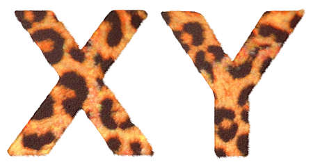 Leopard fur X and Y letters isolated over white background photo