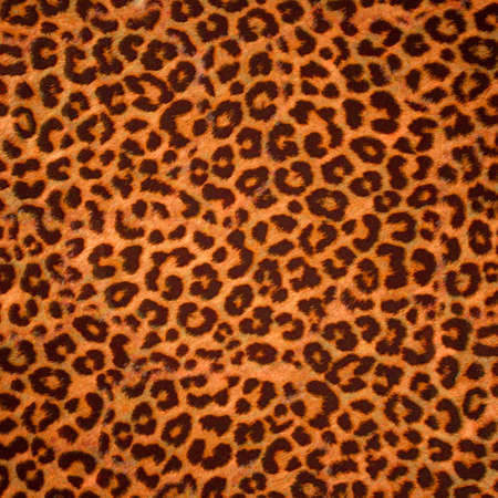 Leopard skin background or texture. Large resolution Stock Photo - 8295755