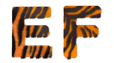fell: Tiger fell E and F letters isolated over white background Stock Photo