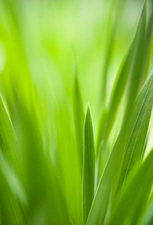 Spring: green grass with shallow DOF.Useful as environmental pattern