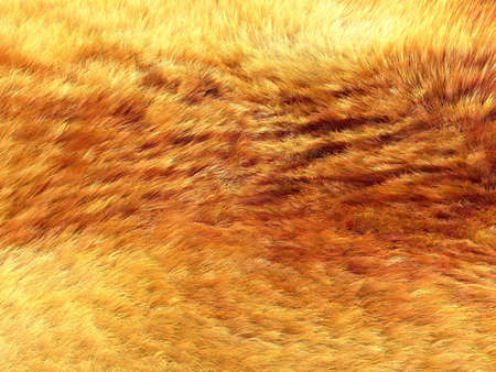 pelage: Fox fur: Yellow and brown pattern or background. Useful for fashion