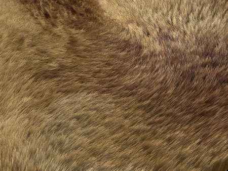 animal hair: Fox fur or fell: brown pattern or background. Useful for fashion Stock Photo