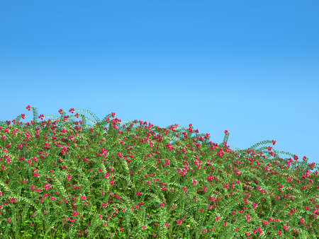 the thicket: Cranberry thicket and blue sky