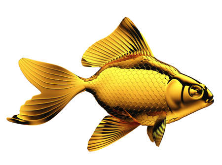 pectoral: Goldfish with fins and scales isolated on white
