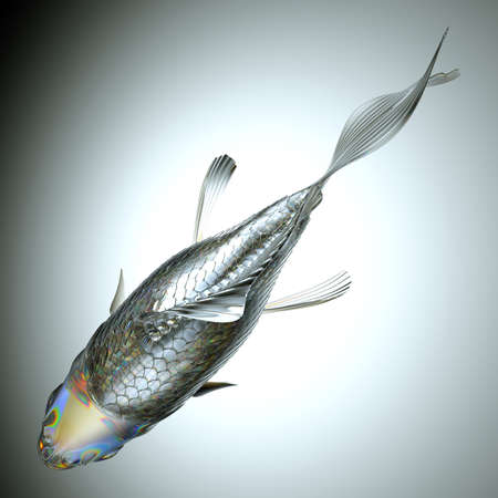 pectoral: Top view of glass fish over grey