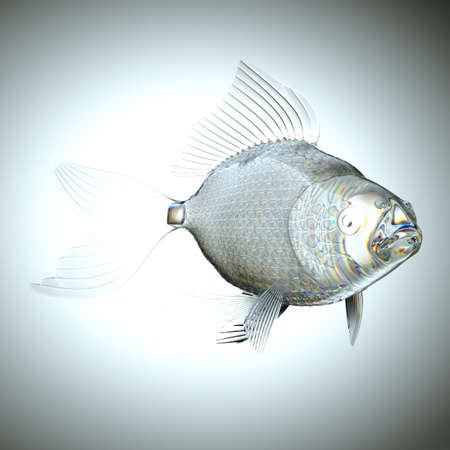 pectoral: Glassy semitransparent fish with scales and fins. Large resolution Stock Photo