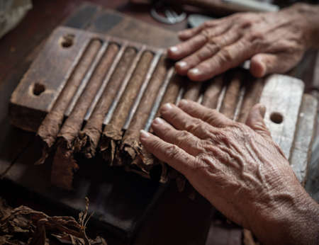 Cigar rolling or making by torcedor in cuba, Pinar del province