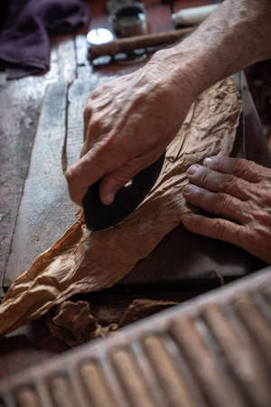 Cigar rolling or making by torcedor in cuba, Pinar del province Stock Photo