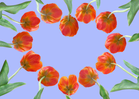 Tulips in the form of heart isolated on sky background