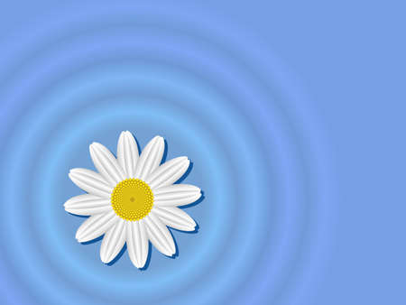Chamomile flower on the water surface