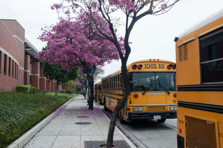 yellow schoolbus: Burbank, California - March 5, 2016. School buses waiting for students at Burbank High School