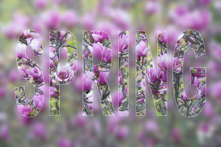 Spring Background - card design with lettering and blossoming tree branches