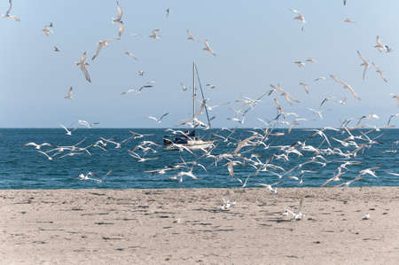 Flock of Seagulls Flying at the Beach Stock Photo